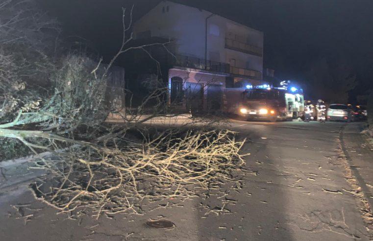 H1 Baum auf Straße